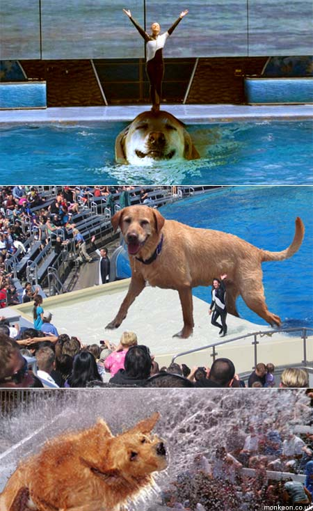 The Biggest Dog In The Sea World